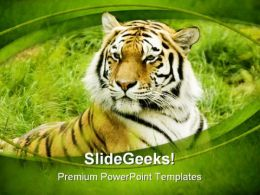 Amur Tiger Animals PowerPoint Templates And PowerPoint Backgrounds 0111
