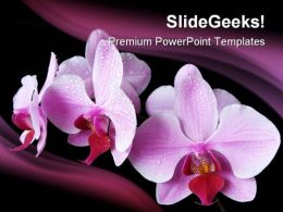 Aplectrum Flower Nature PowerPoint Templates And PowerPoint Backgrounds 0211