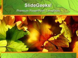 Autumn Leaves Nature PowerPoint Templates And PowerPoint Backgrounds 0511