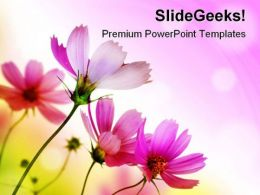 Beautiful Pink Flowers Beauty PowerPoint Templates And PowerPoint Backgrounds 0411