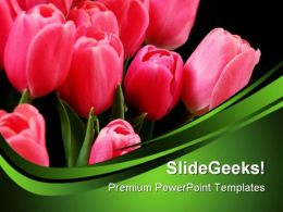 Beautiful Tulips Beauty PowerPoint Templates And PowerPoint Backgrounds 0311