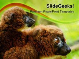 Bellied Lemur Animals PowerPoint Backgrounds And Templates 0111