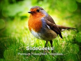 Bird Animals PowerPoint Backgrounds And Templates 0111