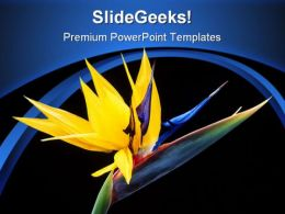 Bird Of Paradise Beauty PowerPoint Templates And PowerPoint Backgrounds 0311