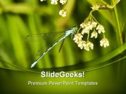 Blue Dragonfly Animals PowerPoint Templates And PowerPoint Backgrounds 0211