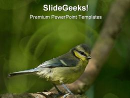 Blue Tit Animal PowerPoint Template 0810