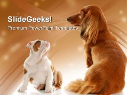 Bull Dog Puppy And Dachshund Animals PowerPoint Templates And PowerPoint Backgrounds 0211