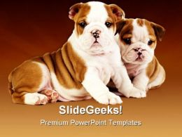 Bulldog Puppies Animals PowerPoint Templates And PowerPoint Backgrounds 0511
