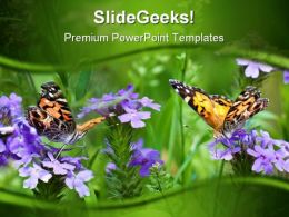 Butterflies Nature PowerPoint Templates And PowerPoint Backgrounds 0211