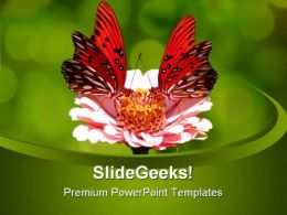 Butterfly Animal PowerPoint Templates And PowerPoint Backgrounds 0511