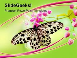 Butterfly Animals PowerPoint Template 0910