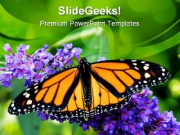 Butterfly Animals PowerPoint Template 1110