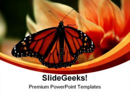Butterfly Beauty Nature PowerPoint Templates And PowerPoint Backgrounds 0211