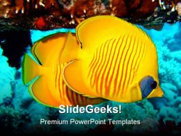 Butterfly Fish Animals PowerPoint Template 0910
