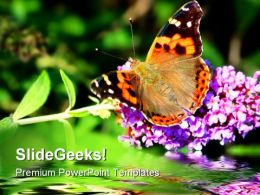 Butterfly On Flower Beauty PowerPoint Templates And PowerPoint Backgrounds 0211