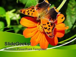 Butterfly On Orange Flower Nature PowerPoint Templates And PowerPoint Backgrounds 0611