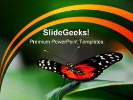 Butterfly Ready Animals PowerPoint Templates And PowerPoint Backgrounds 0211