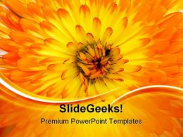 Calendula Background Nature PowerPoint Templates And PowerPoint Backgrounds 0511