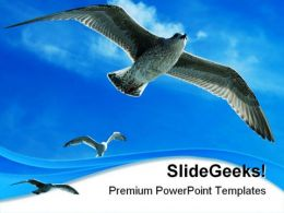 Chasing The Leader Animals PowerPoint Templates And PowerPoint Backgrounds 0211
