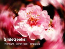 Cherry Blossoms Nature PowerPoint Templates And PowerPoint Backgrounds 0311