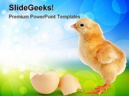 Chick New Born Animals PowerPoint Templates And PowerPoint Backgrounds 0511
