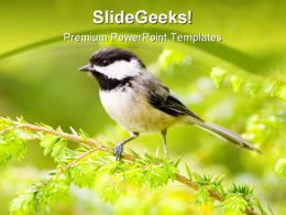 Chickadee Animals PowerPoint Templates And PowerPoint Backgrounds 0211