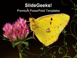 Clouded Yellow Butterfly Animals PowerPoint Templates And PowerPoint Backgrounds 0111