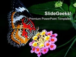 Colorful Butterfly Animals PowerPoint Templates And PowerPoint Backgrounds 0211