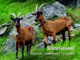 Couple Of Goats Animals PowerPoint Templates And PowerPoint Backgrounds 0111