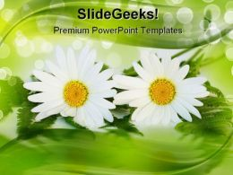 Daisy Nature PowerPoint Templates And PowerPoint Backgrounds 0311