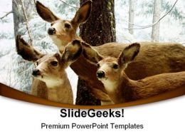 Deer Animals PowerPoint Templates And PowerPoint Backgrounds 0211