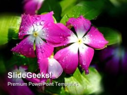 Dew Flower Nature PowerPoint Templates And PowerPoint Backgrounds 0311