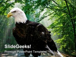 Eagle Animals PowerPoint Template 1010