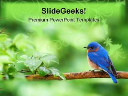 Eastern Bluebird Animals PowerPoint Templates And PowerPoint Backgrounds 0111