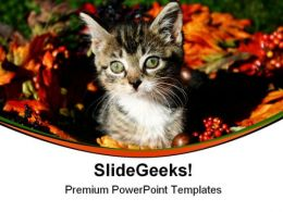 Fall Kitty Animals PowerPoint Templates And PowerPoint Backgrounds 0511