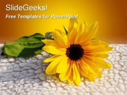 Sunflower on wool free powerpoint templates ppt themes presentation backgrounds