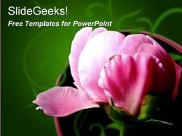 Pink Peony Flower03 0510 Free Powerpoint Templates and Ppt Slides