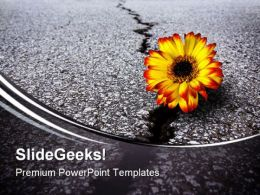 Flower In Asphalt Metaphor PowerPoint Templates And PowerPoint Backgrounds 0611