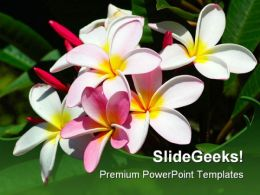 Frangipani Flowers Beauty PowerPoint Template 0910