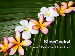 Frangipani On Green Leaf Nature PowerPoint Templates And PowerPoint Backgrounds 0311
