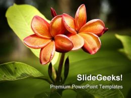 Frangipani Orange Flower Nature PowerPoint Templates And PowerPoint Backgrounds 0311