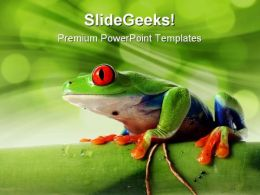 Frog Animals PowerPoint Templates And PowerPoint Backgrounds 0211