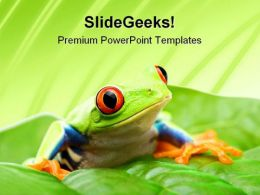 Frog On A Leaf Nature PowerPoint Templates And PowerPoint Backgrounds 0211