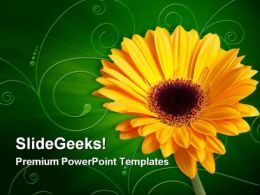 Gerber Yellow Flower Beauty PowerPoint Templates And PowerPoint Backgrounds 0311