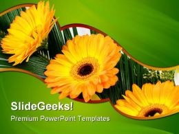 Gerbers Flowers Beauty PowerPoint Templates And PowerPoint Backgrounds 0511