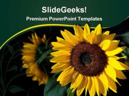 Glowing Sunflower Beauty PowerPoint Templates And PowerPoint Backgrounds 0311