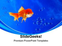 Golden Fish02 Animals PowerPoint Templates And PowerPoint Backgrounds 0211