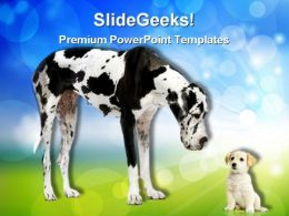 Great Dane Harlequin Animals PowerPoint Templates And PowerPoint Backgrounds 0311