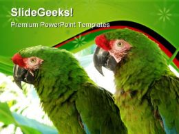 Green Parrots Animals PowerPoint Templates And PowerPoint Backgrounds 0611