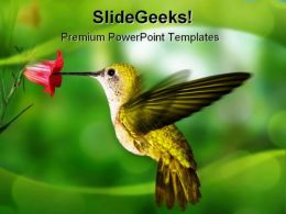 Humming Bird Animals PowerPoint Template 0910